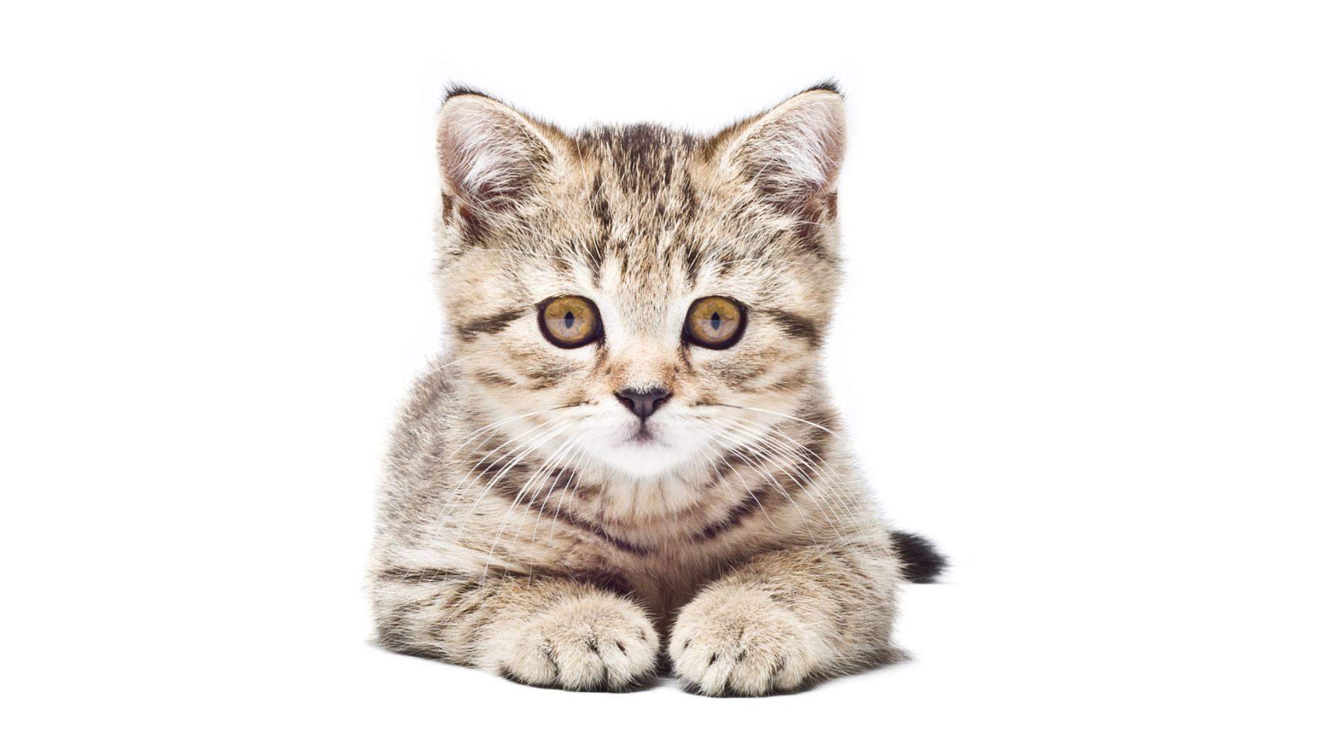 Wenn #CatContent einfach nicht mehr ausreicht.
